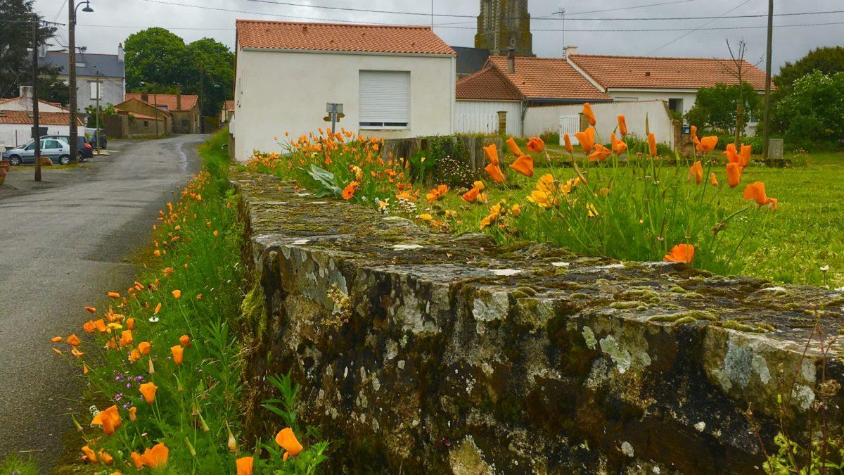 Qui fera une fleur à notre belle commune ?